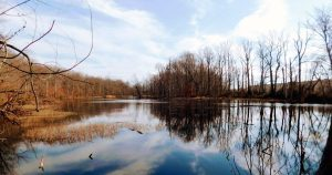 Read more about the article The Wildlife of Davidson's Mill Pond Park