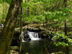 Read more about the article Discover Waterfalls at Apshawa Preserve
