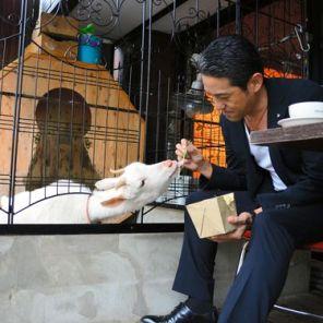 japanski kafic sa kozama