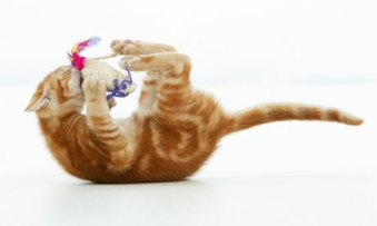 Cat playing with a toy mouse