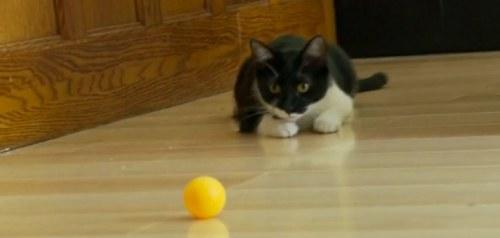 macka ping pong