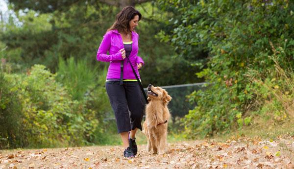 dog_walking_600_0