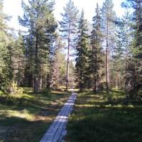 Kluntarna en ö i Luleå skärgård