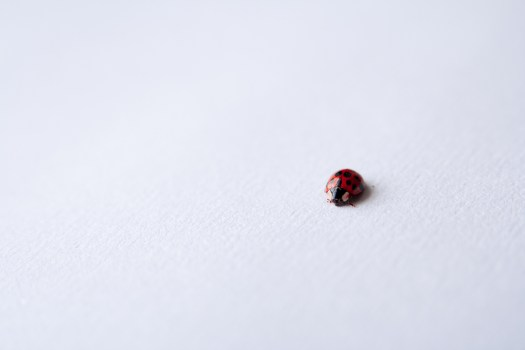 Ladybug on white photo by Glen Carrie