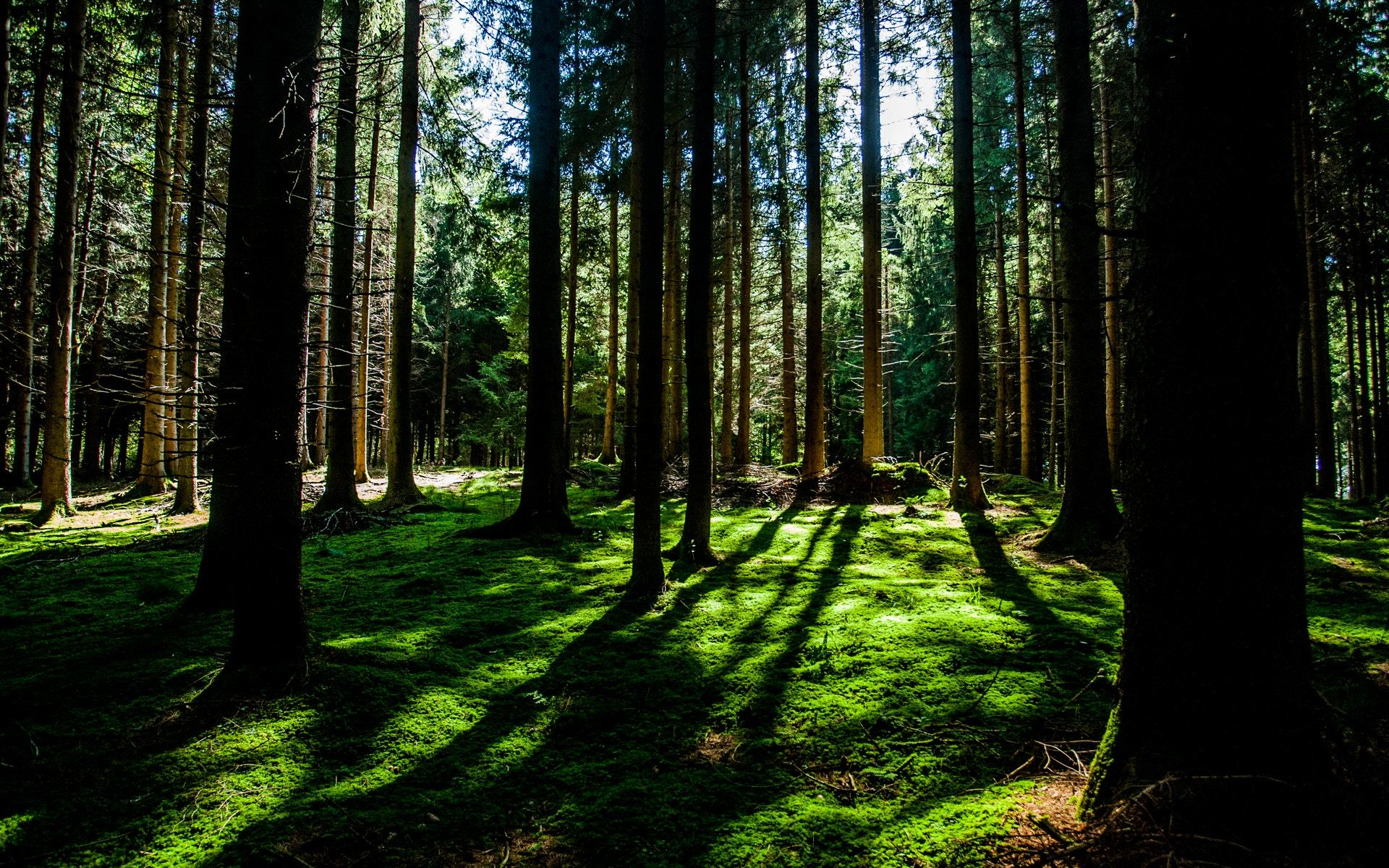 """Tree shadows on moss"" by Sven Schlager on Unsplash"