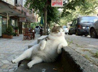 wpid-cat_relaxg.jpeg