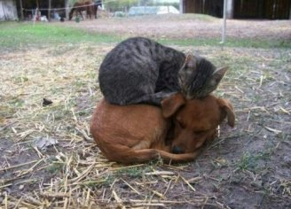 wpid-cat_sleepg_on_dog.jpeg