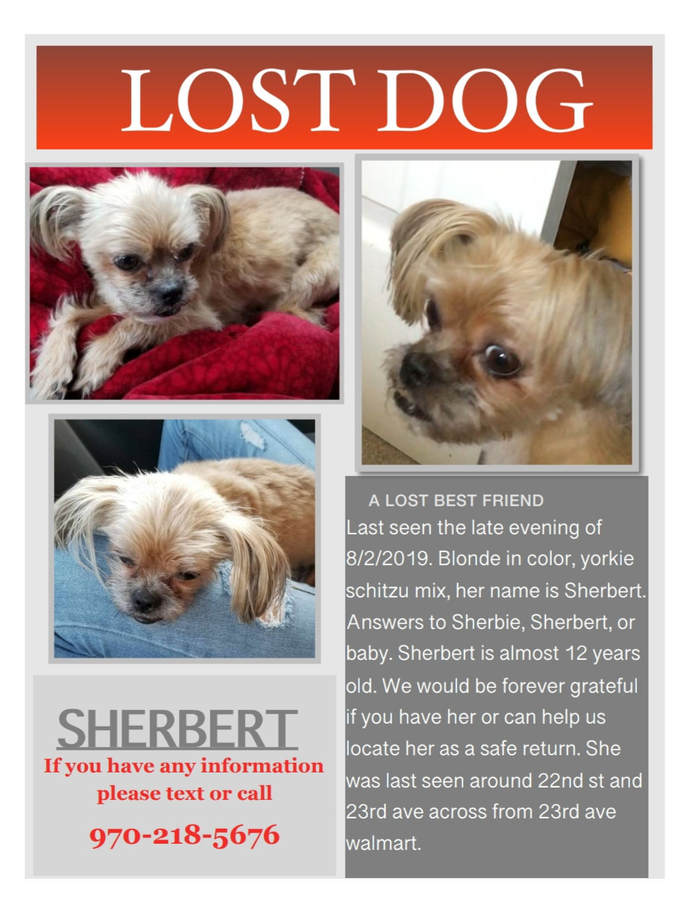 Can Dogs Have Sherbert : sherbert, Sherbert,, Female,, Seen:, August, 2019,, Greeley,, 80631