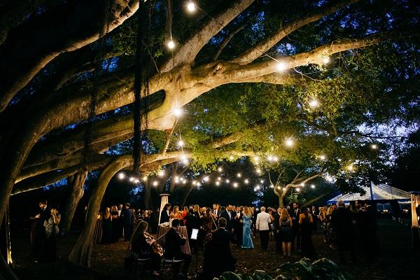 outdoor wedding reception under tree at Selby Gardens