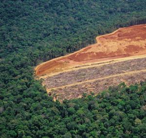 Deforestation (3/6)