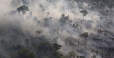 Deforestation (6/6)