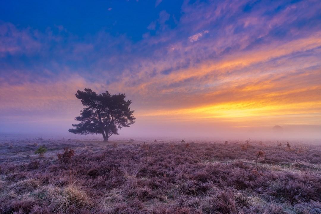 Terletse heide, Roosendaalse veld,Herfst, Oktober, nldazuu fotografeert, autumn, fall, herfst