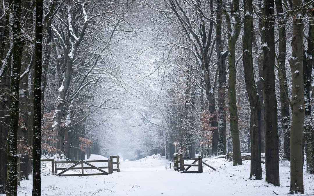 Fotograferen in de sneeuw, de witte wereld in