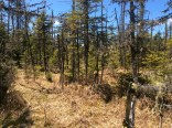 Forested wetland project