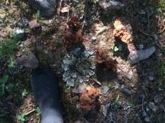 Another beautiful lichen find.