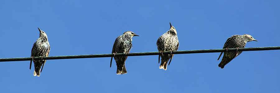 Four birds rest on a powerline against a blue sky