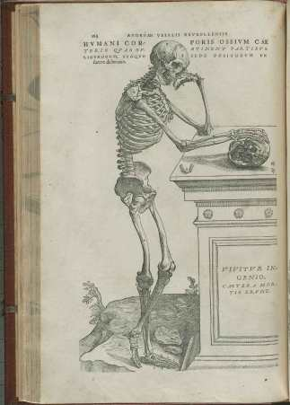 Illustration from Vesalius's De Fabrica showing a skeleton comtemplating a skul