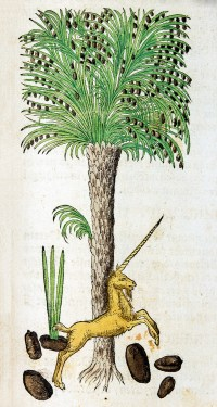 A hand colored print of a nut laden palm tree surrounded by nuts, one of which is sprouting, and a unicorn.