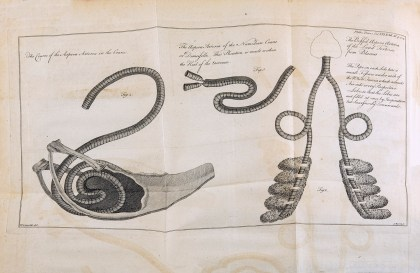 A plate from the Journal Philosophical Transactions illustrating anatomical parts of a crane.