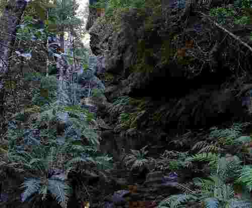 Rain Forest Blue Mountrains