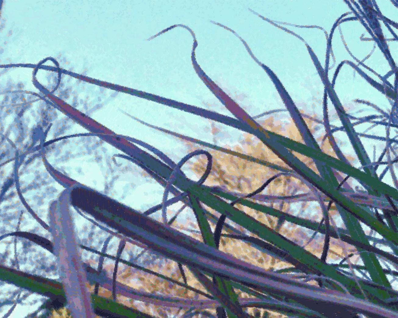 IMG_1304-003 skme purple grass g gall