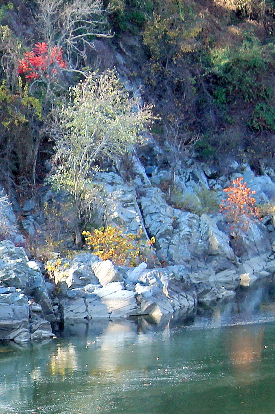 great great chain bridge rocks leaves gall