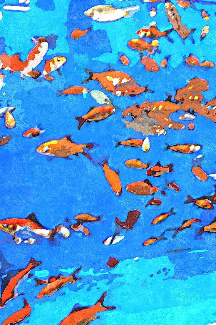 IMG_4452-003 gall goldfish tank