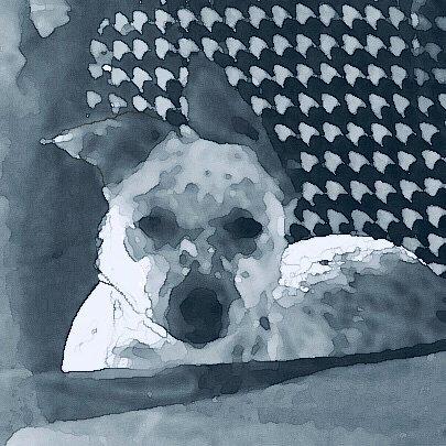 doggo_blk gray ret 1 cutout Gall