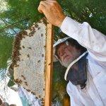 Les Crowder, Celebration of National Pollinator Week