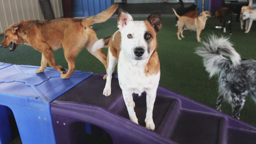 Animal Humane New Mexico provides 'pup-dates' for 2021
