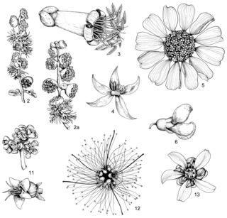 Art by Alice Tangerini: Dominant Desert Perennial Plants