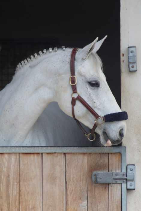 nmv-horses-salto-doble-comprimimos