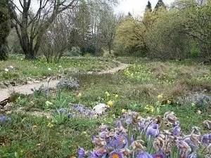 Singletreff-Botanischer-Garten-Frankfurt