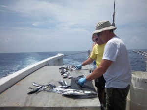 Mark, Chief Scientist, and Adam, Scientist, preparing Atlantic Mackeral for the next station
