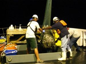 The trawl on deck