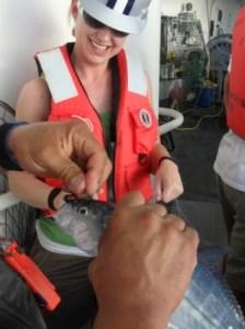 We caught a mackerel