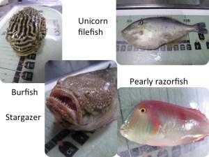 Fish caught off of North Carolina