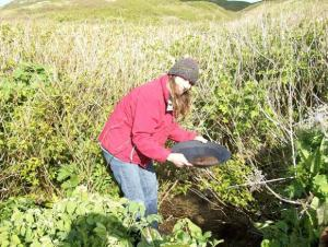 Panning for gold on Herendeen Island.  The mica in the water is deceptively similar to gold flake.