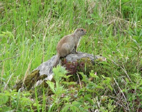 This little ground squirrel wasn't bothered as we walked by.