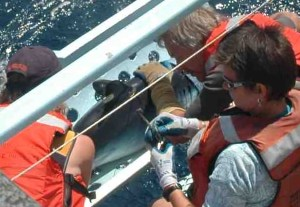 NOAA Teacher at Sea Elizabeth Eubanks (right) on the platform taking a DNA sample from a Mako shark.