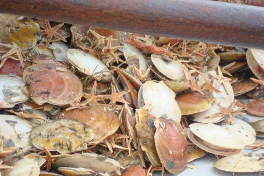 Sea stars and sea scallops!