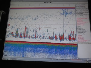 "The above picture shows a computer screen with dense red ""backscatter"" characteristic of large amount of fish. The yellow lines above and below the backscatter show the location of the trawl lines."