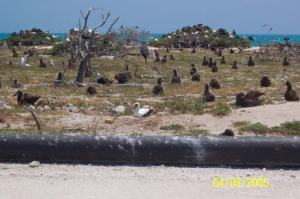 Seabirds on Tern Island