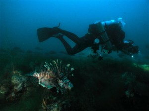 Diver and Marine Biologist Paula Whitfield swims alongside a lionfish, the focus of her research.