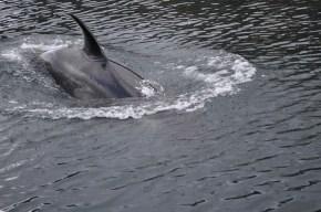Very close orca!