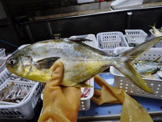 Florida Pompano (Trachinotus carolinus)