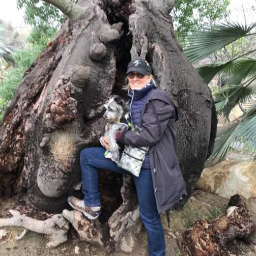 Favorite Tree, San Diego