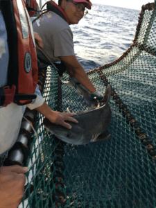 TAS Karen Grady 4-16-17 baby tiger shark