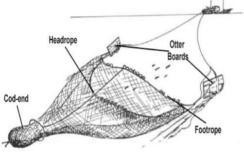 Trawl-Diagram