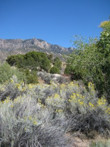 A view of the Sandias Mountains from Elena Gallegos park, just outside of Albuquerque, NM.